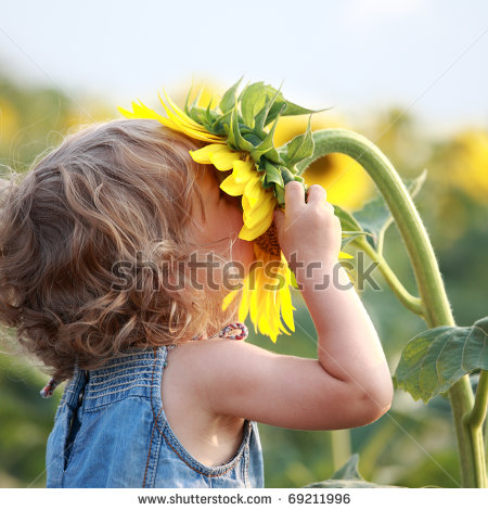stock-photo-cute-child-with-sunflower-in-summer-field-69211996 (450x470, 57Kb)
