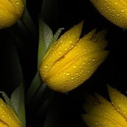 flor (41) (250x250, 15Kb)