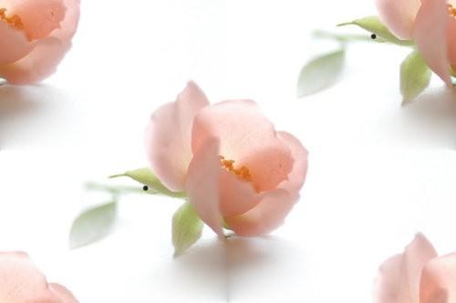 flor (119) (500x333, 15Kb)