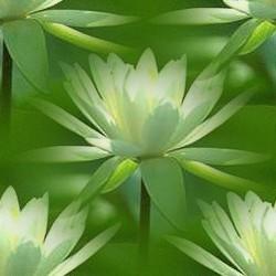 flor (46) (250x250, 17Kb)