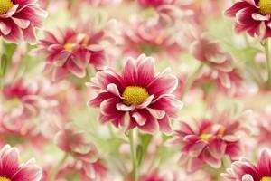 flor (67) (300x200, 19Kb)
