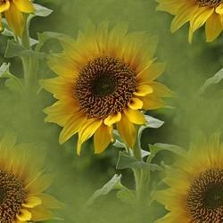 flor (53) (250x250, 21Kb)
