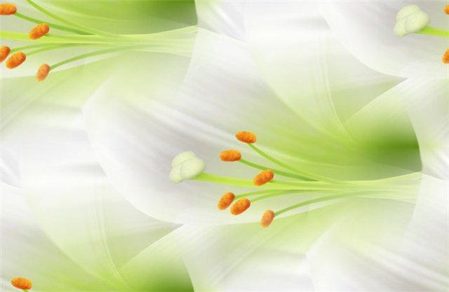 flor (185) (640x417, 23Kb)