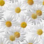 flor (26) (150x150, 25Kb)