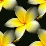 flor (27) (150x150, 26Kb)
