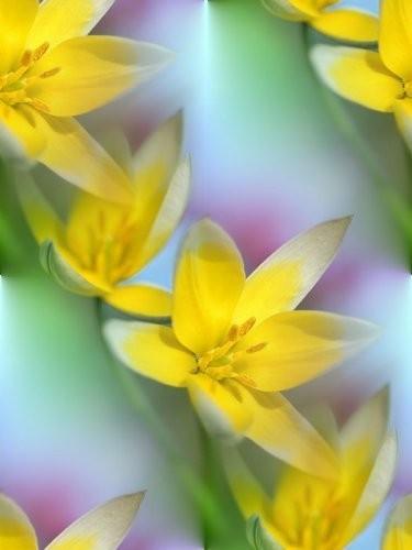 flor (81) (375x500, 28Kb)