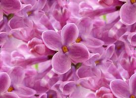 flor (66) (275x200, 44Kb)