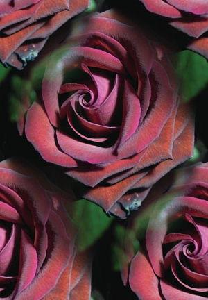 flor (74) (300x432, 46Kb)