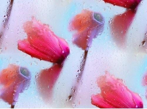 flor (136) (500x369, 47Kb)
