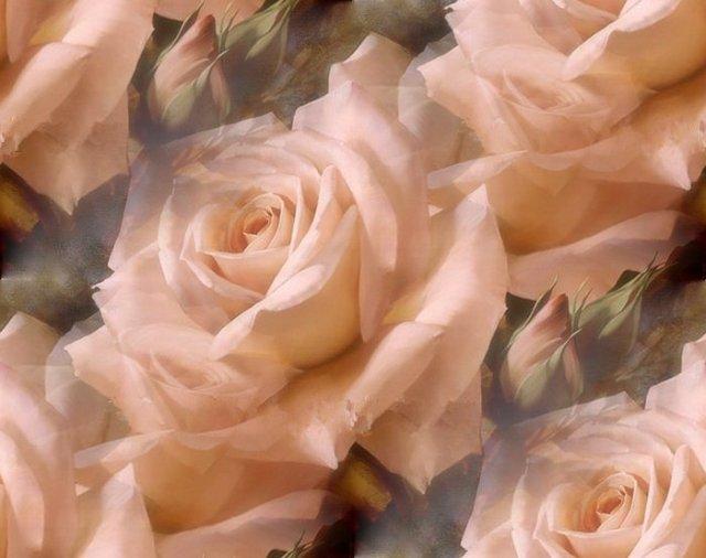 flor (226) (640x506, 49Kb)