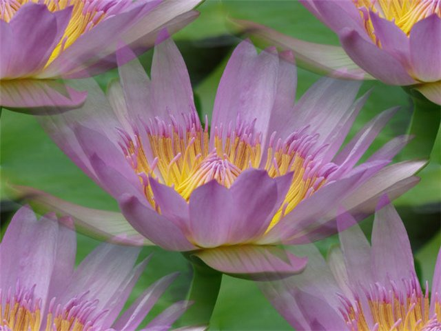 flor (206) (640x480, 51Kb)