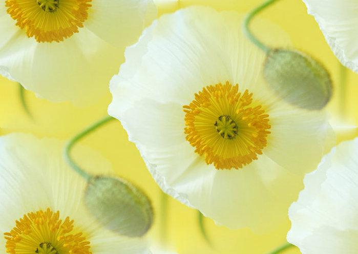flor (251) (699x496, 51Kb)