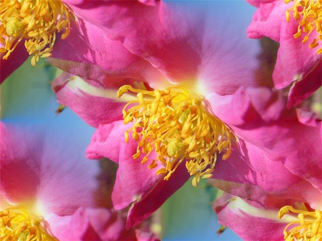 flor (209) (640x480, 57Kb)