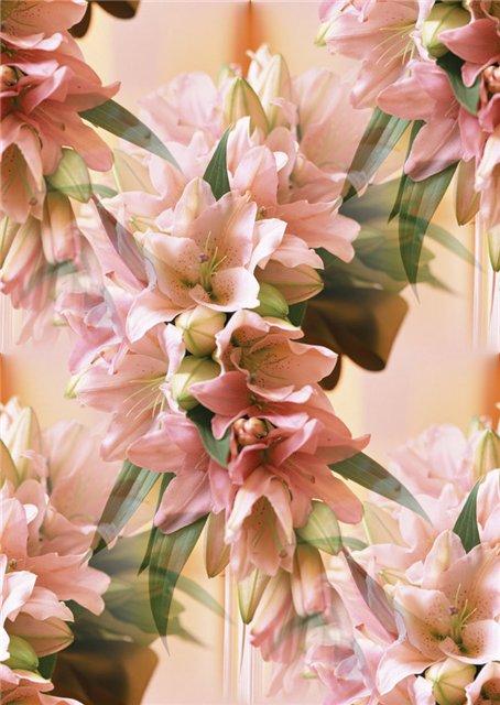 flor (106) (454x640, 65Kb)