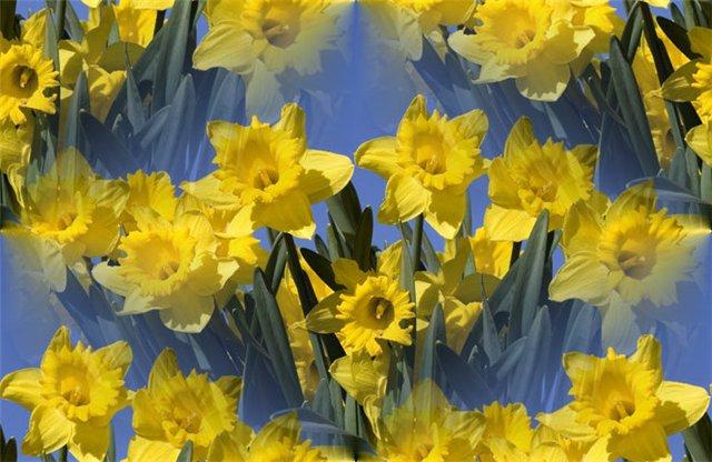 flor (184) (640x416, 66Kb)