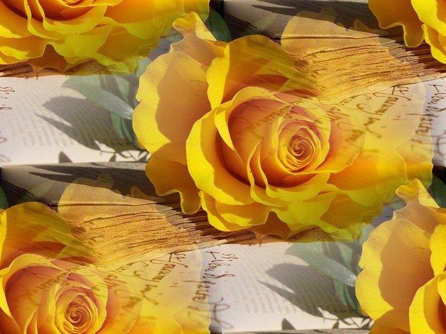 flor (213) (640x480, 68Kb)