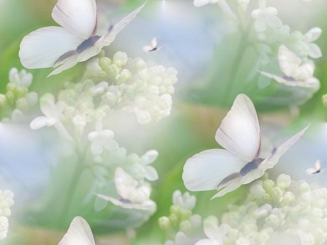 flor (241) (650x488, 77Kb)