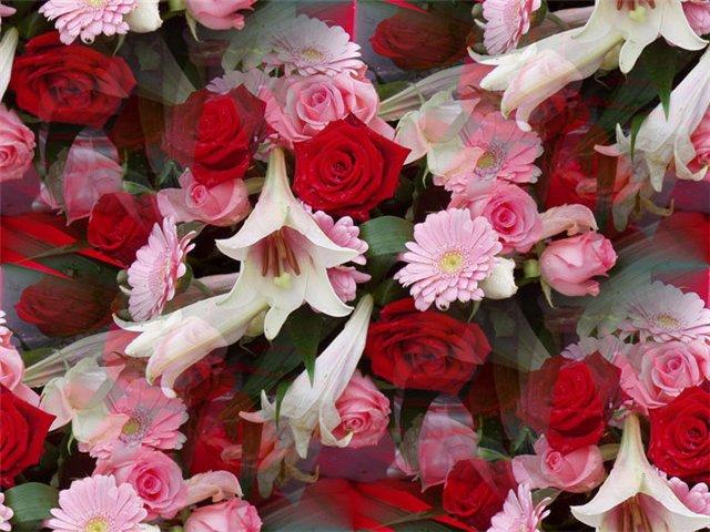 flor (223) (640x480, 81Kb)