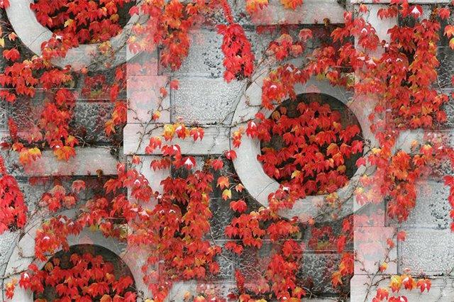 flor (194) (640x426, 108Kb)
