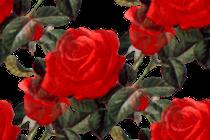 prozrac) (214) (210x140, 68Kb)