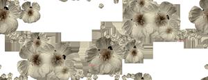 prozrac) (238) (300x116, 65Kb)