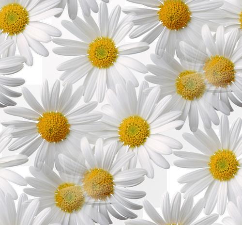 prozrac) (268) (500x464, 495Kb)