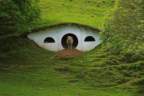 овцеводческой фермы.
