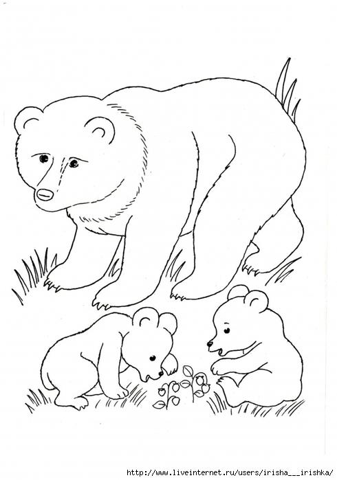 медведь рисунки животного