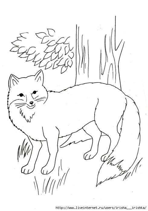 Раскраска дикие животные - 5