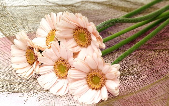 цветы-картинки-для дневника (700x437, 288Kb)