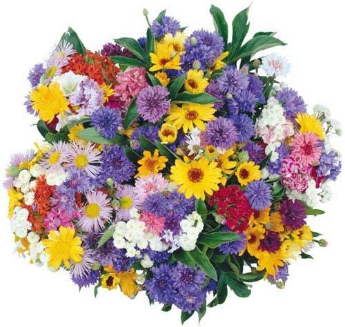 цветы-картинки-для дневника (500x474, 65Kb)