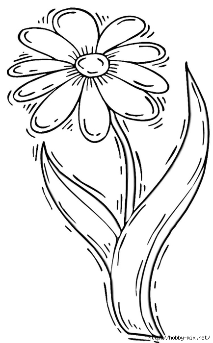 daisy-flower-coloring-page (1) (434x700, 125Kb)