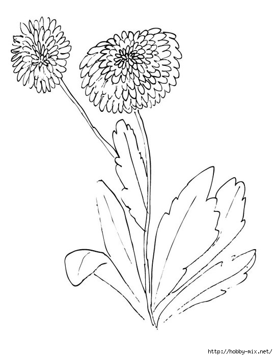 daisy-flower-coloring-page (540x700, 118Kb)