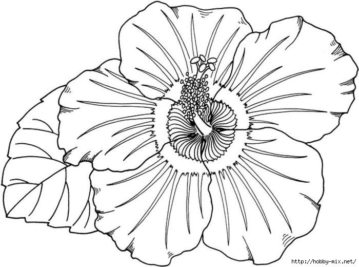 hibiscus-coloring-page (700x520, 158Kb)