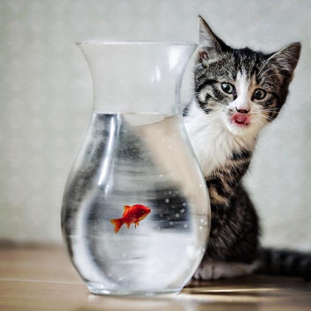 Животные самое интересное в блогах