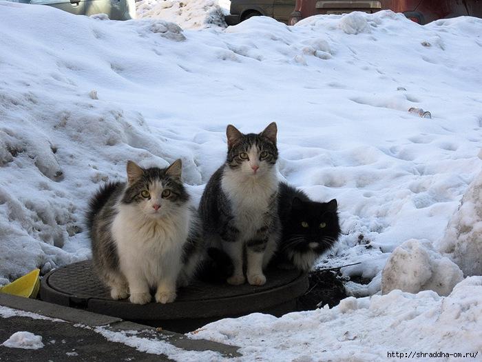 Питерские котики 1 (700x525, 259Kb)