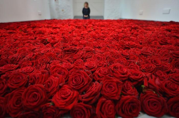 gallaccio-roses-1 (700x461, 110Kb)