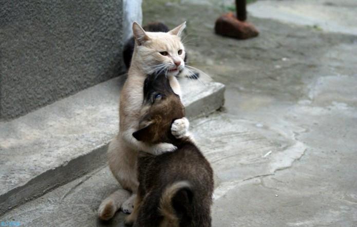 Изображение - дружба, щенок, кошка. Животные Фабрика картинок