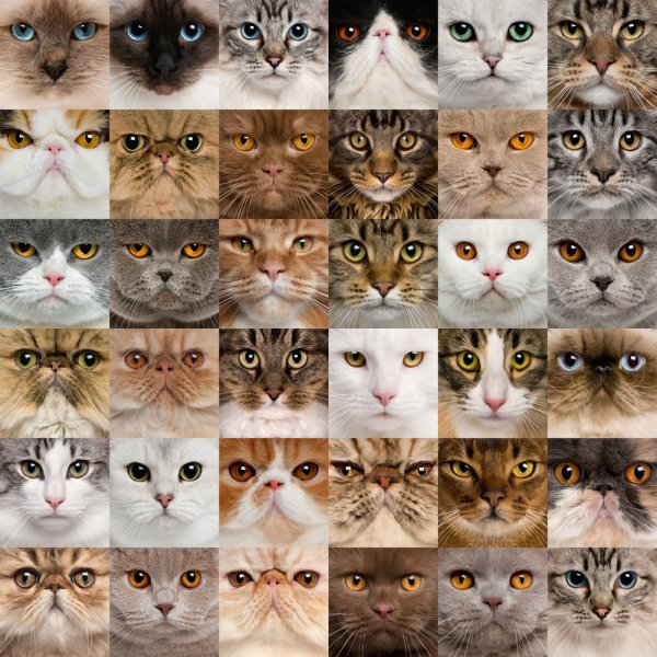 Коты (600x600, 105Kb)