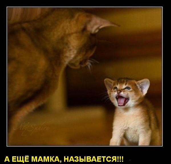 МАМКА, НАЗЫВАЕТСЯ! (600x576, 51Kb)