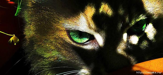 greeneyes-0 (694x320, 144Kb)
