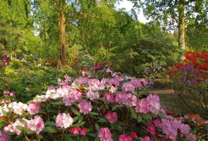 Рододендроновый парк-Westerstede Rhododendronpark. 88146