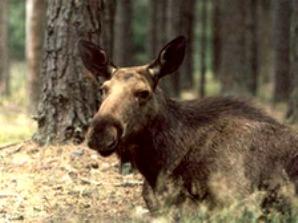 Закон разрешил американцам есть животных, которых они сбили на дороге