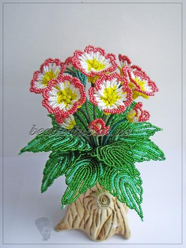 Примула- первоцвет(русское название).  Листья цельные, цветки пятичленные,разнообразных расцветок и оттенков...