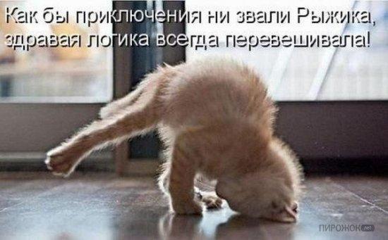 Кошка лучше чем жена
