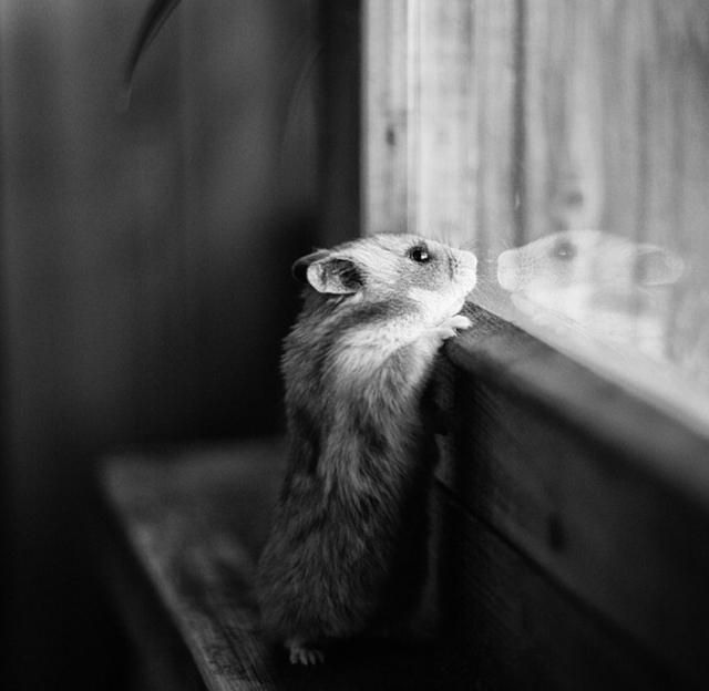 смешные животные фото 3 (640x624, 169Kb)