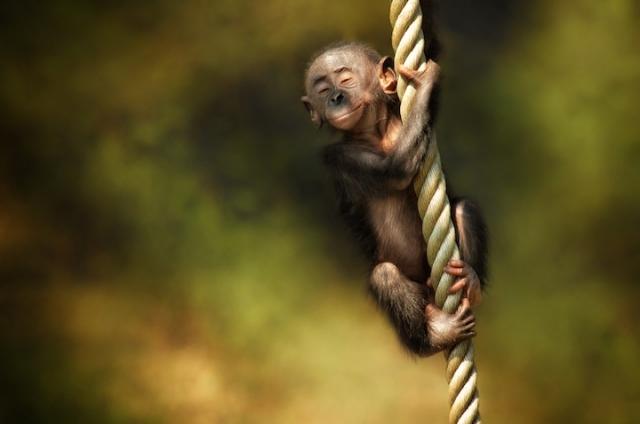 смешные животные фото 4 (640x424, 123Kb)