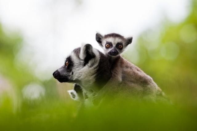 смешные животные фото 10 (640x426, 119Kb)
