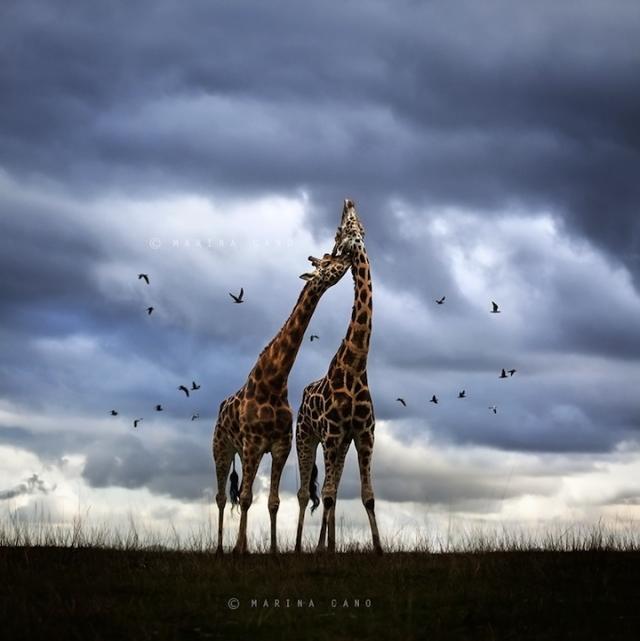 смешные животные фото 12 (640x641, 201Kb)