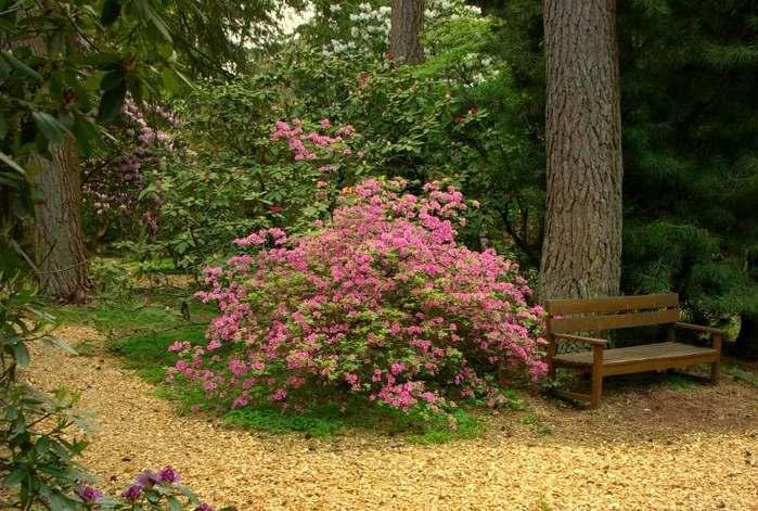 Рододендроновый парк-Westerstede Rhododendronpark. 95834